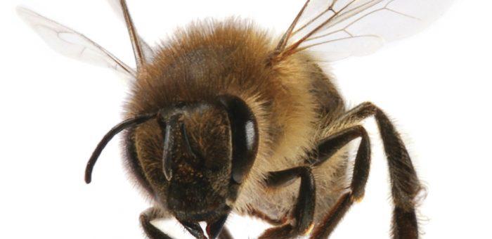 Lassított felvétel a méhekről