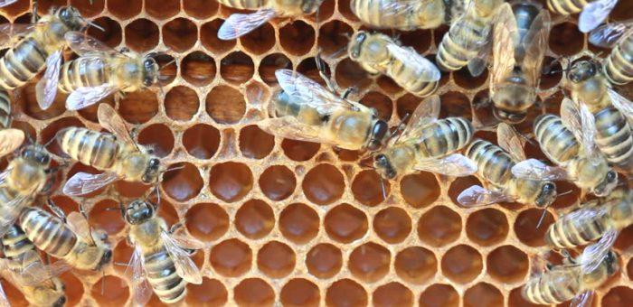 Érdekes videó a méhek fejlődéséről