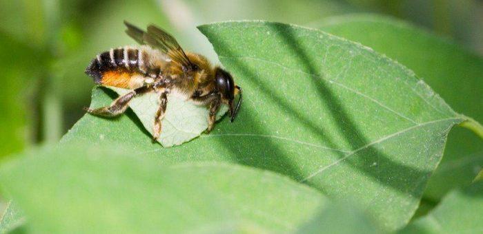 Vírus miatt pusztulnak a méhek