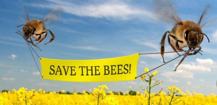 A 2017-es Zöld OT állásfoglalása egyes méhveszélyes rovarirtó szerek korlátozásáról