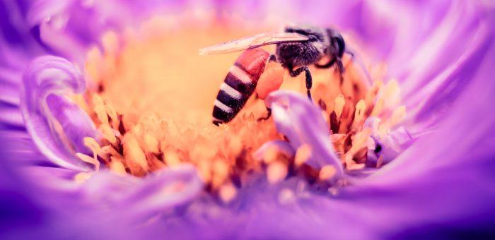 Ultimátumot kaptak a méhészek